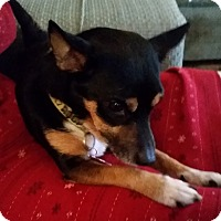 Adopt A Pet :: Pepito - Elkhart, IN