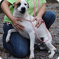 Adopt A Pet :: Duke - Ridgeland, SC