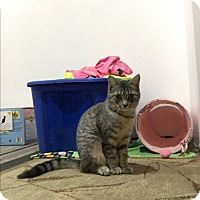 Adopt A Pet :: Gemma - White Lake, MI