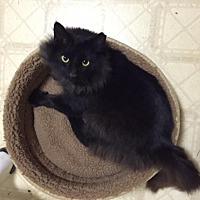 Adopt A Pet :: Buster II - Fairfax Station, VA