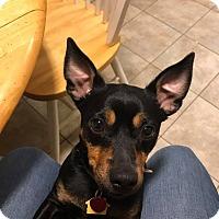 Adopt A Pet :: Cooley - Dallas, TX