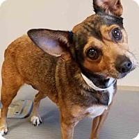 Adopt A Pet :: Laverne - Oswego, IL