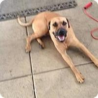 Adopt A Pet :: Keesha's Charlie aka Marley - Las Vegas, NV