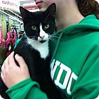 Adopt A Pet :: Leo - Riverhead, NY