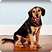 Adopt A Pet :: Simone - Owensboro, KY