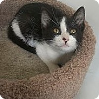 Adopt A Pet :: George Washinton - Richboro, PA