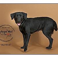 Adopt A Pet :: Blythe - Louisville, KY