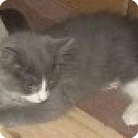 Adopt A Pet :: K-Leonard2-Rory - Colorado Springs, CO