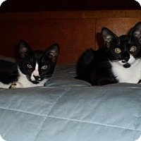 Adopt A Pet :: Harriet and Ralpie - Staten Island, NY