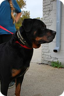 Dog Rescue Sterling Heights Mi