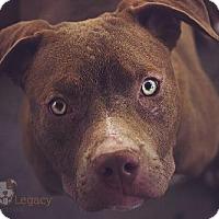 Adopt A Pet :: Nitro - Las Vegas, NV