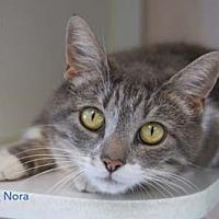 Adopt A Pet :: Nora - Merrifield, VA