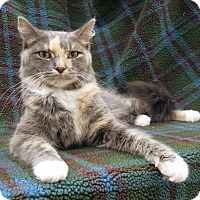 Adopt A Pet :: Serena - Redwood Falls, MN
