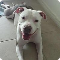 Adopt A Pet :: Tank - Ft. Myers, FL