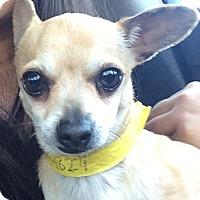Adopt A Pet :: Alen - Glendale, CA
