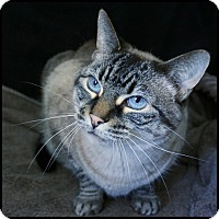 Adopt A Pet :: Ms B - Colorado Springs, CO