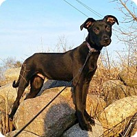 Adopt A Pet :: Zeus - Bloomington, MN