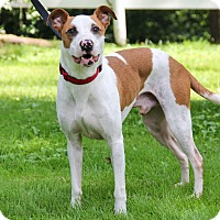 Adopt A Pet :: Hoover - New Oxford, PA