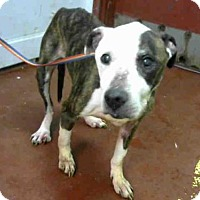Adopt A Pet :: ED - Atlanta, GA