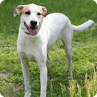 Adopt A Pet :: Millie - Enfield, CT
