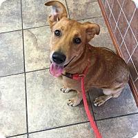 Adopt A Pet :: Sandy - sweet girl! - Glastonbury, CT