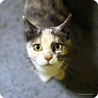 Adopt A Pet :: Peppermint Patty - Tucson, AZ