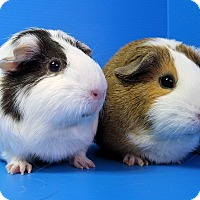 Adopt A Pet :: Sunny and Puddin - Lewisville, TX