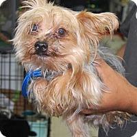 Adopt A Pet :: Jamil - Brooklyn, NY