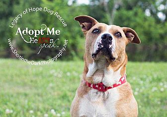 Pit Bull Terrier Mix Dog for adoption in Broken Arrow, Oklahoma - Dena