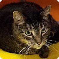 Adopt A Pet :: TJ - Elyria, OH