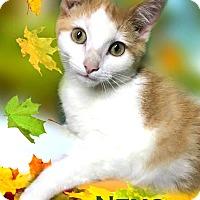 Adopt A Pet :: Nemo - Franklin, TN