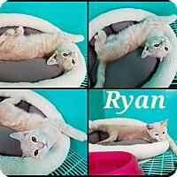 Adopt A Pet :: Ryan - California City, CA