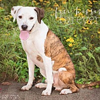 Adopt A Pet :: Ty - Terre Haute, IN