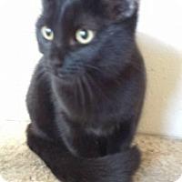 Adopt A Pet :: Ebony 5245 - Joplin, MO
