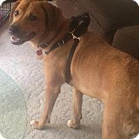 Adopt A Pet :: Bella - Fairfield, NJ