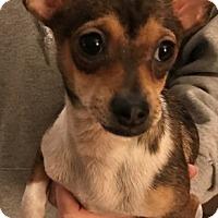 Adopt A Pet :: Hannah - Flossmoor, IL