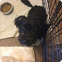 Adopt A Pet :: Minnie Mouse - S. Pasedena, FL