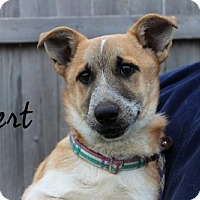 Adopt A Pet :: Bert - Joliet, IL