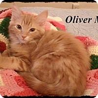 Adopt A Pet :: Oliver - Brandon, FL