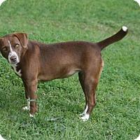 Adopt A Pet :: Furby - Lufkin, TX