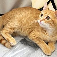 Adopt A Pet :: Zest - Concord, NC