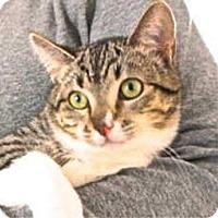 Adopt A Pet :: Gouda - Davis, CA