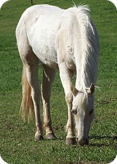 Palomino Mix for adoption in Newcastle, California - Sweet Sandy