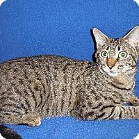 Adopt A Pet :: Nerd - Watkinsville, GA