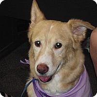 Adopt A Pet :: Mandy - Birmingham, AL
