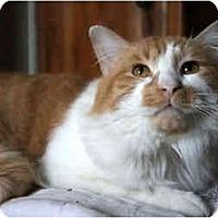 Adopt A Pet :: Pumpkin - Xenia, OH