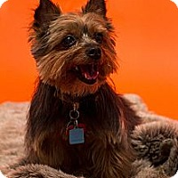 Adopt A Pet :: Doogie - Baton Rouge, LA