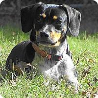Adopt A Pet :: PIPPA - Parsons, TN