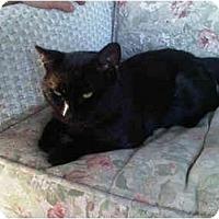 Adopt A Pet :: Spooky - Bayonne, NJ