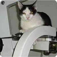 Adopt A Pet :: Rocky - Boca Raton, FL